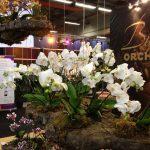 MERKACTIVATIE_Beurs_Flora_Holland10